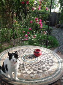 Cat and garden at Casa Mosaica