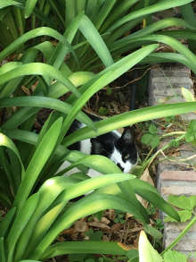 friendly cat relaxes in the garden at Casa Mosaica