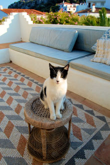 Cat and terrace at Casa Mosaica