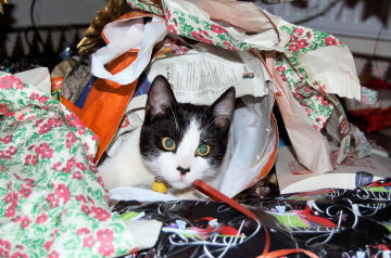 Cat in wrapping paper