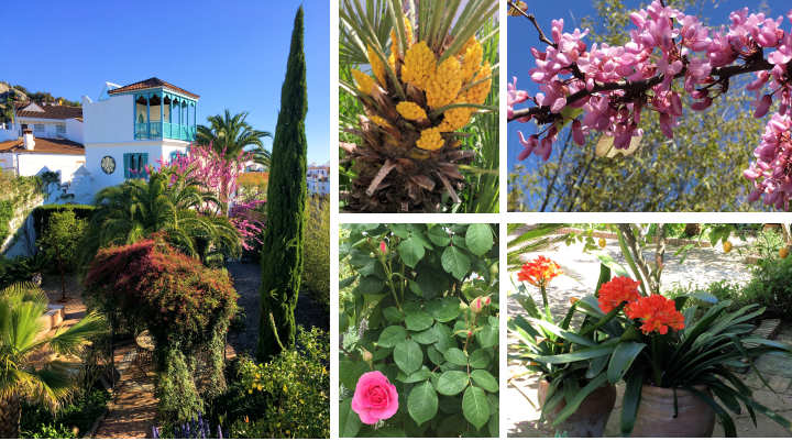 The spring blooms at Casa Mosaica